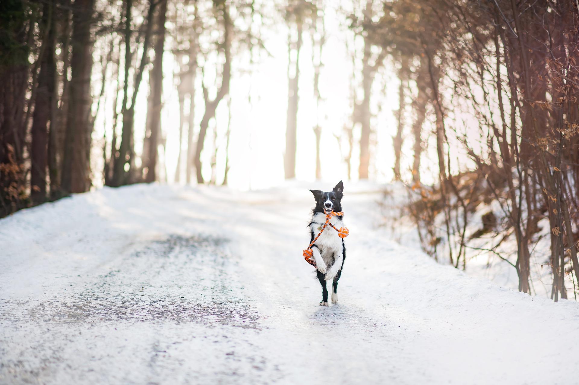 Zdrowy pies – przewodnik po żywieniu psów