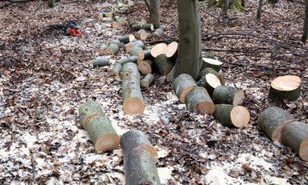 Wycinka drzew po nowemu czyli nowelizacja ustawy o ochronie przyrody.