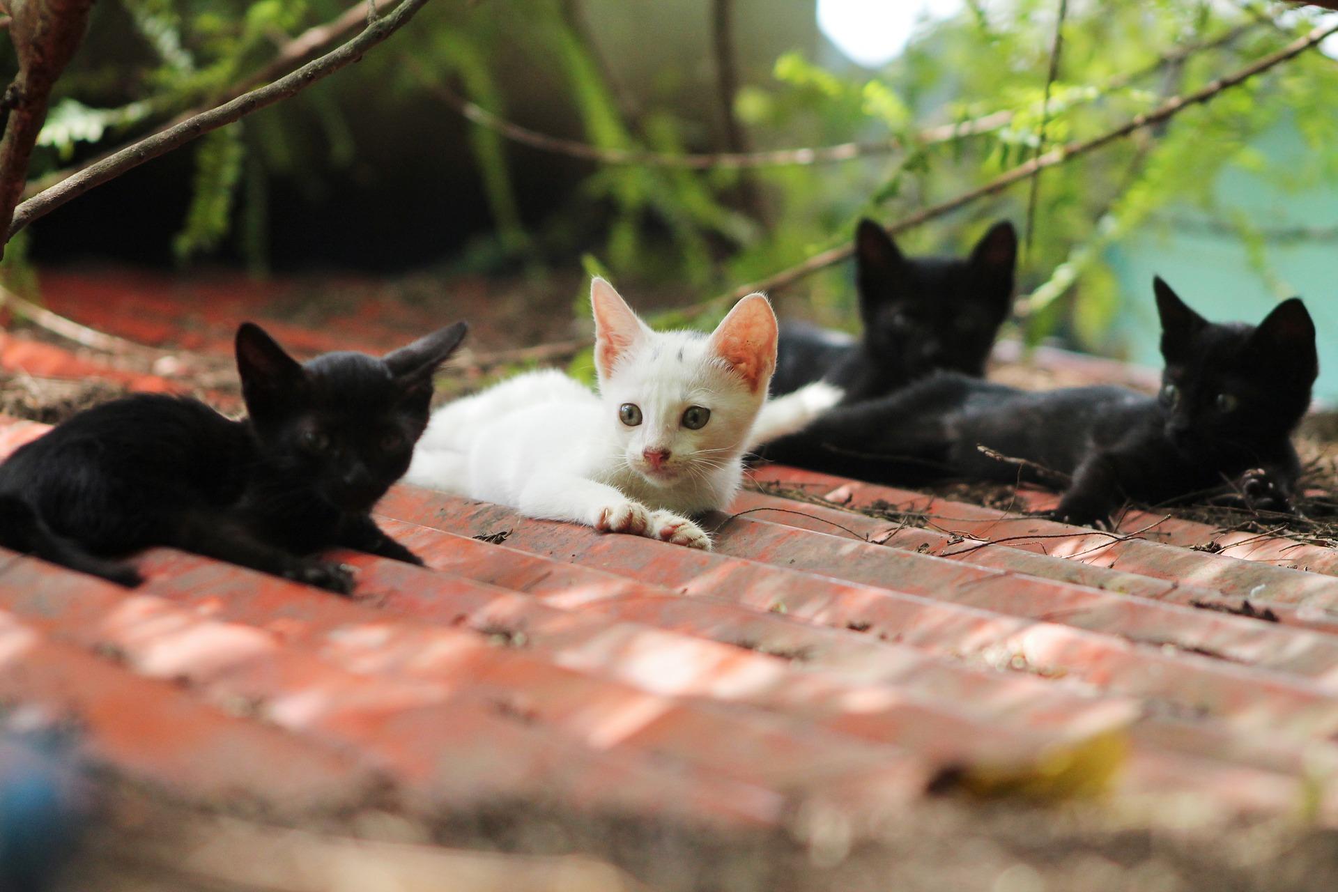 Czego nie wiemy o kotach?
