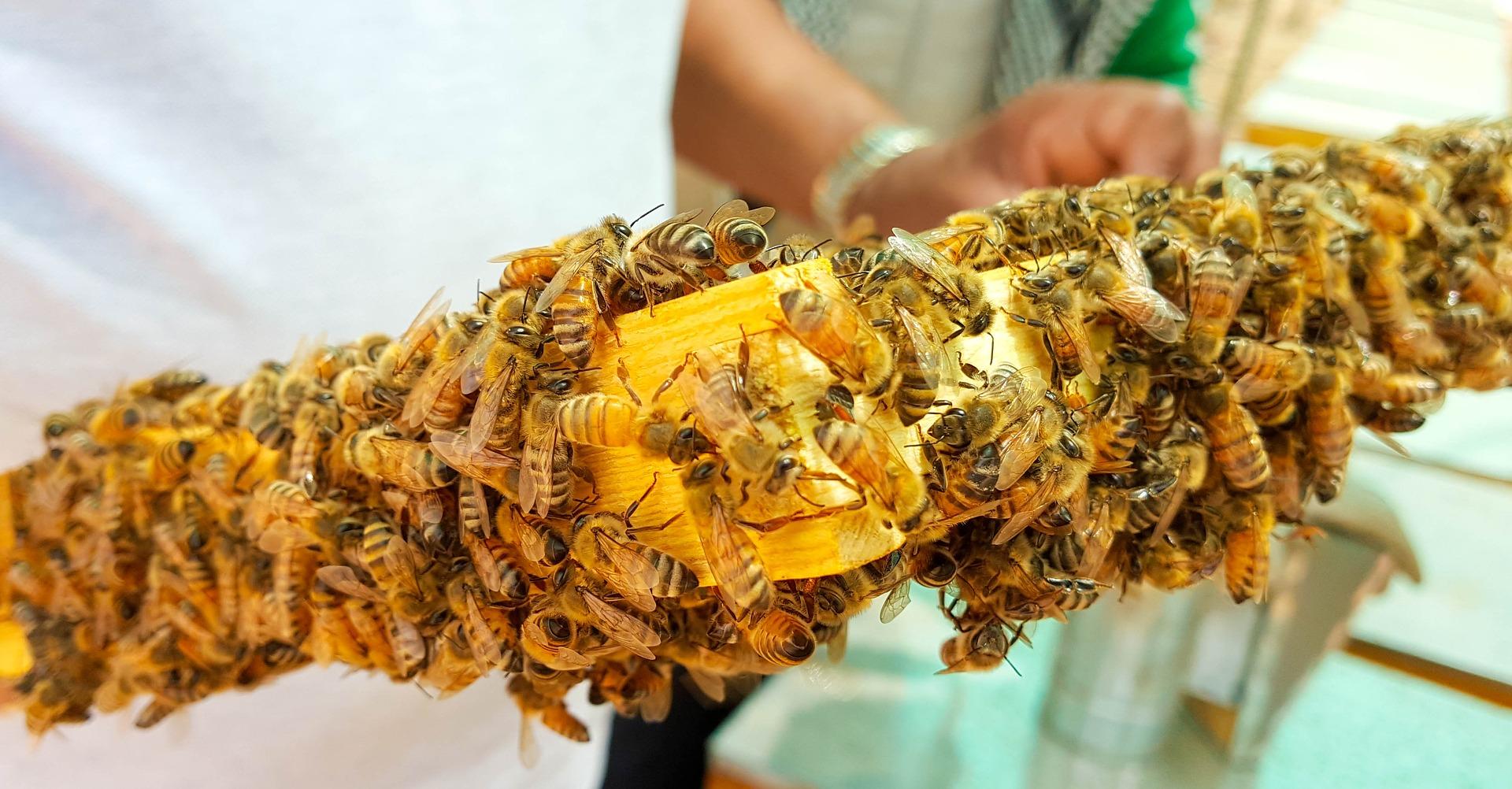 Jad pszczeli kontra choroby