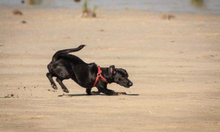 Adopcja czy kupno psa z hodowli ? Posłuchaj rad specjalisty. VIDEO