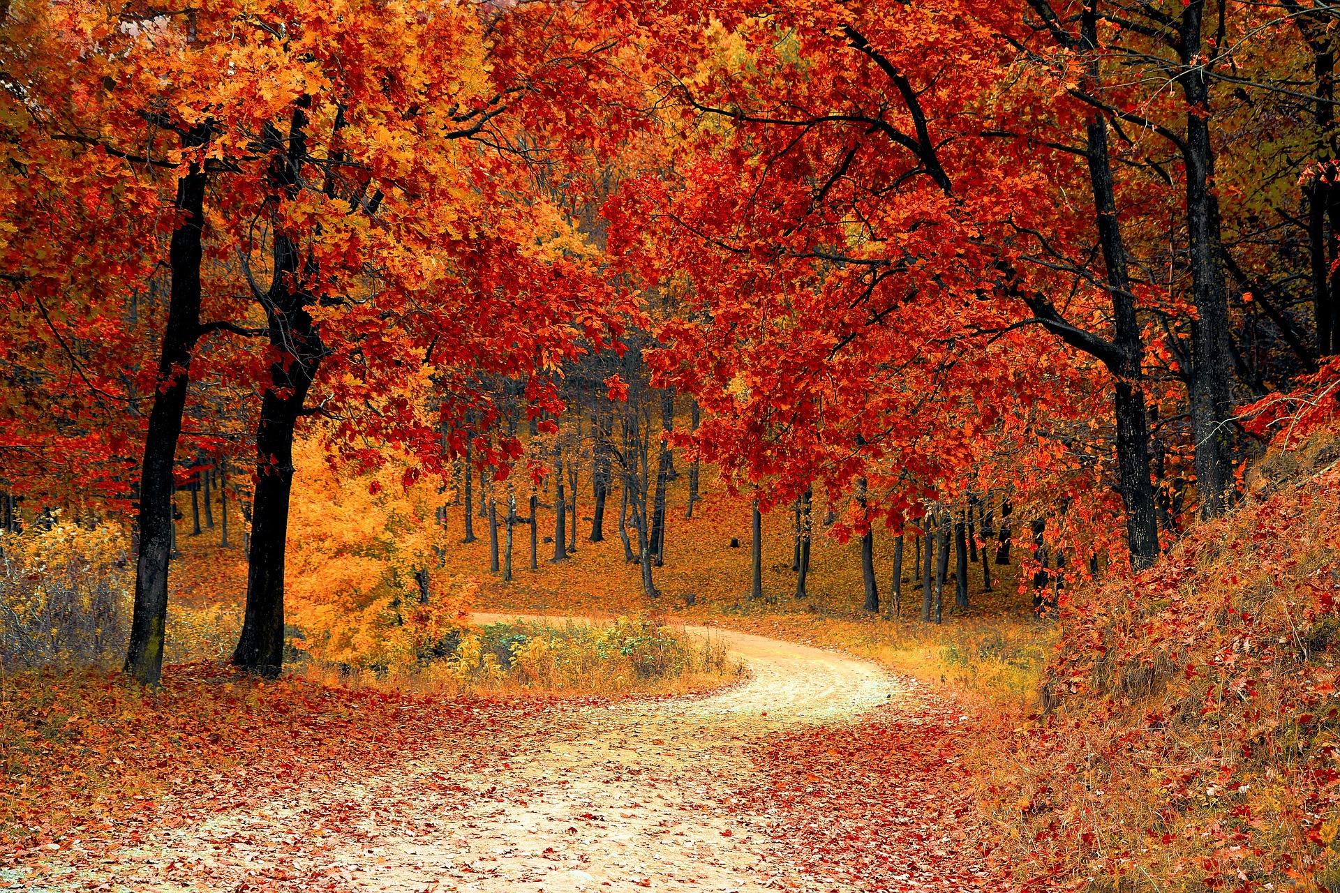 Dendroterapia czyli przejmowanie dobrej energii od drzew