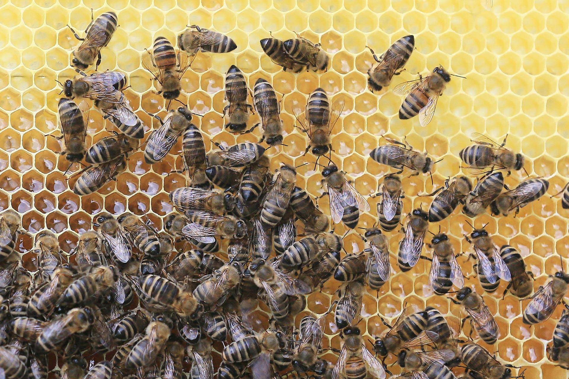 Czy wiesz jak wygląda ul od środka?  Wycieczka po królestwie pszczół