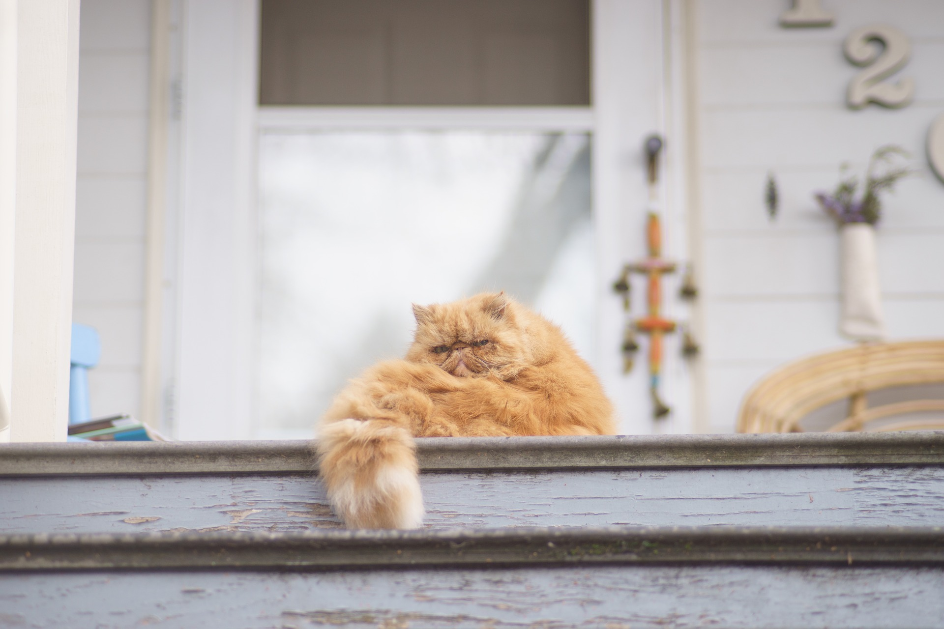 Co zrobić gdy kot sąsiada wybiera nasz dom? VIDEO
