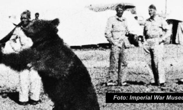 Chcą uczcić kaprala Niedźwiedzia Wojtka