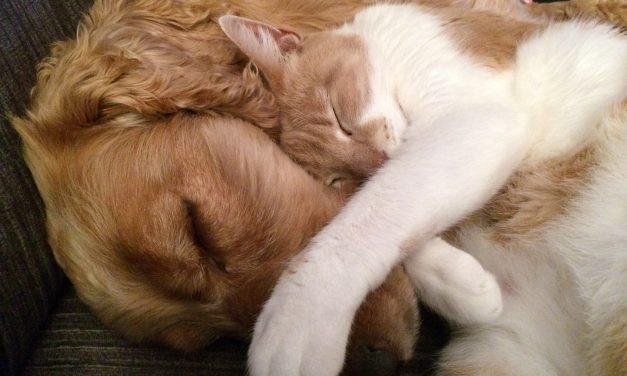 Kot w domu psa czy pies w domu kota ?