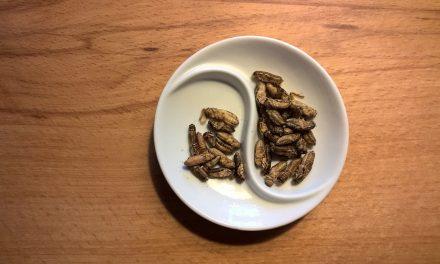 Dieta w oparciu o owady?