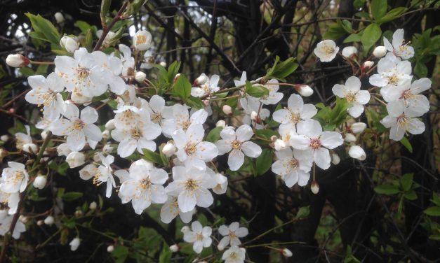Wiosna, ach to Ty [Galeria]