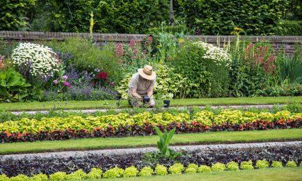 Czas pomyśleć o porządkach w ogródku