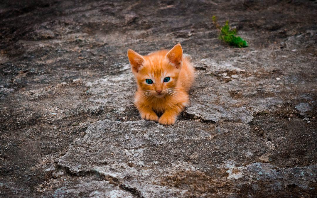 Kot sąsiada