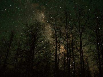 Popatrz w niebo jak świecą prawdziwe gwiazdy – Karol Wójcicki