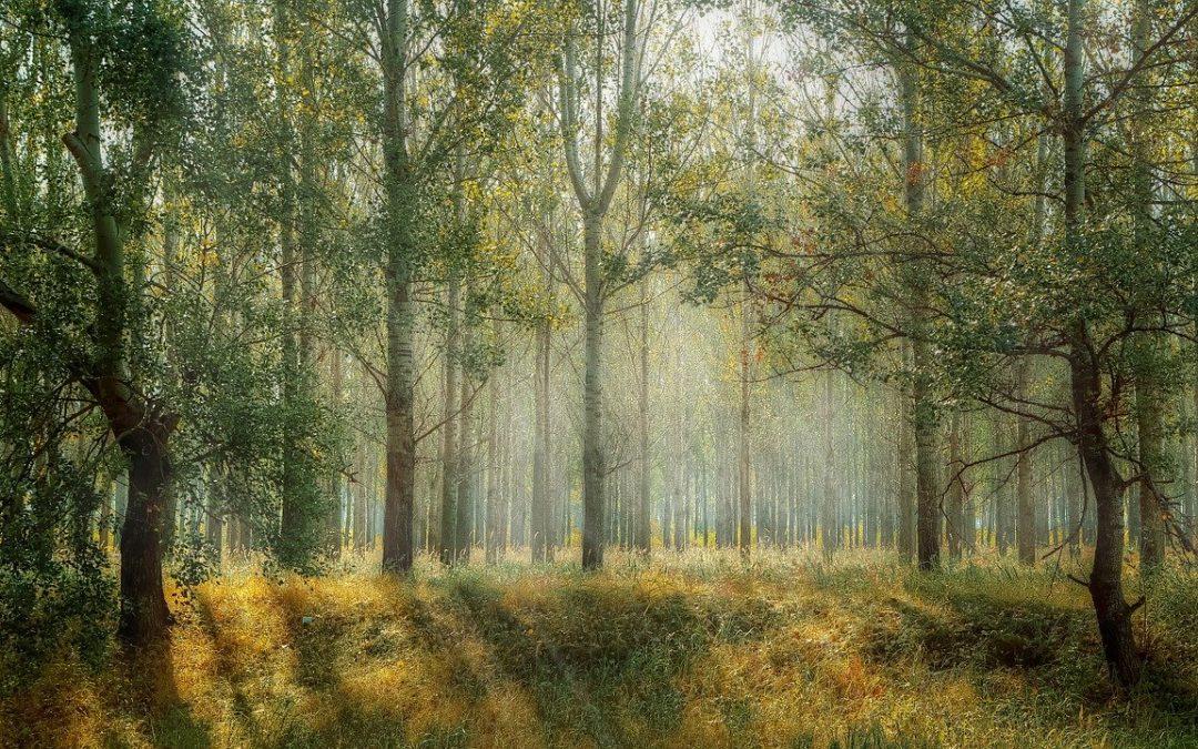 Zabierz pięć z lasu – nowa akcja lasów Państwowych – rzecznik Maciej Pawłowski